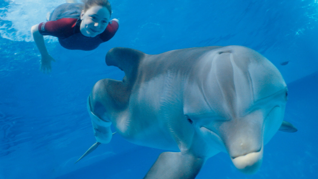 movie smack talk movie review dolphin tale 2 the relentless